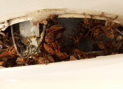 Unprotected Recessed Light Fixtures Are Susceptible To Infestation